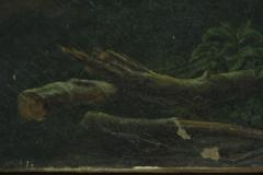Restauro_di_alcuni_dipinti_su_tela_quirinale_parte_1-7